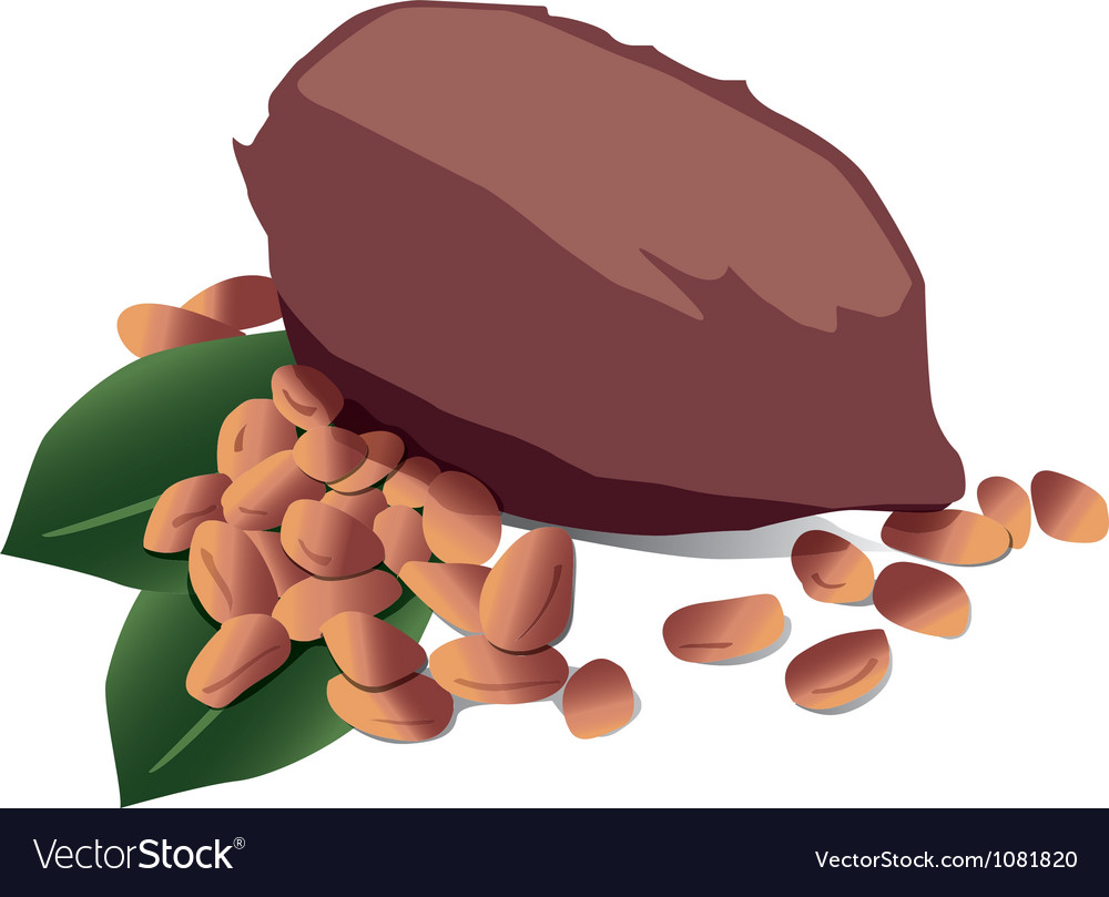Cocoa vector | Price: 1 Credit (USD $1)
