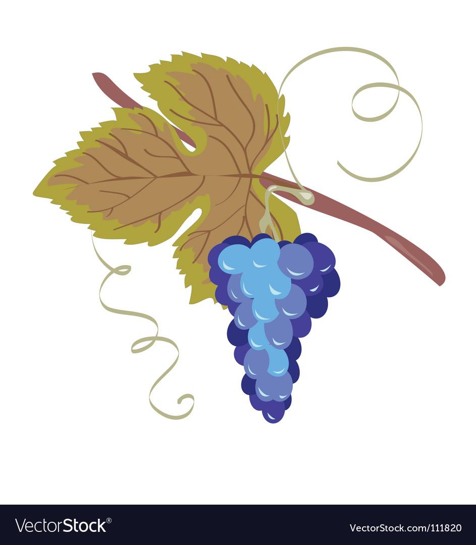 Grape blue vector | Price: 1 Credit (USD $1)