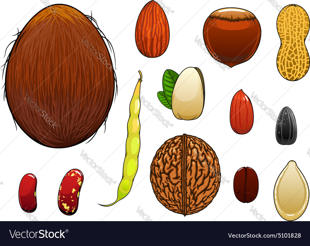 Realistic nuts seeds and beans in cartoon style vector