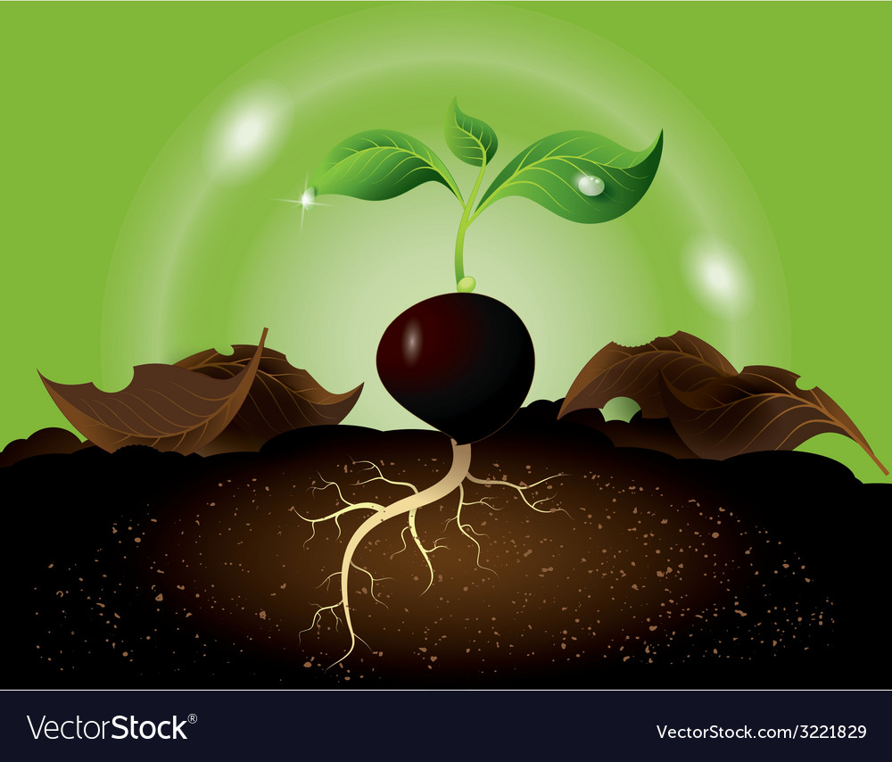Green sprout growing from seed vector | Price: 1 Credit (USD $1)