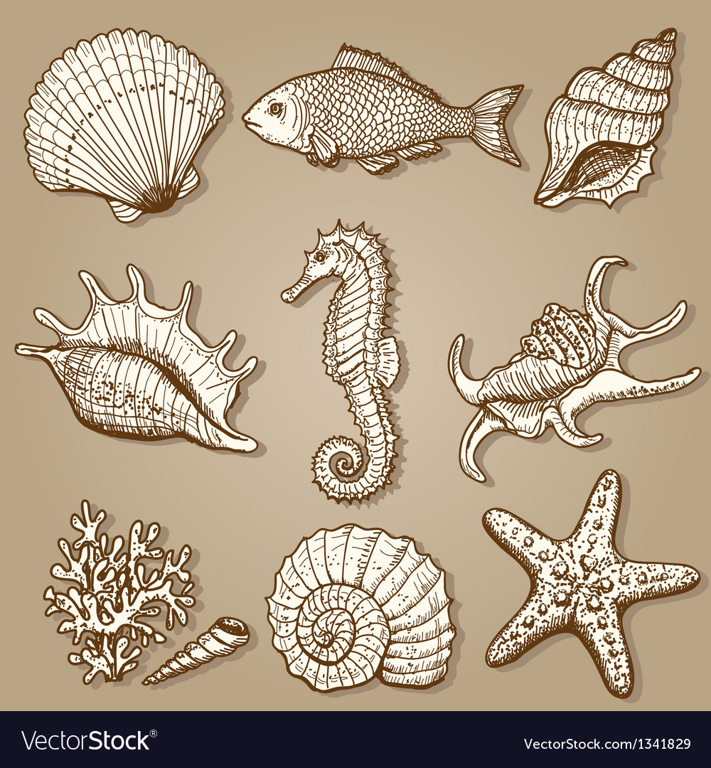 Sea collection original hand drawn vector | Price: 1 Credit (USD $1)