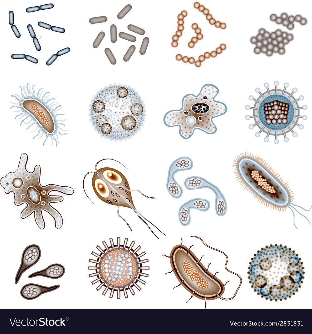 Bacteria and virus cells vector | Price: 1 Credit (USD $1)