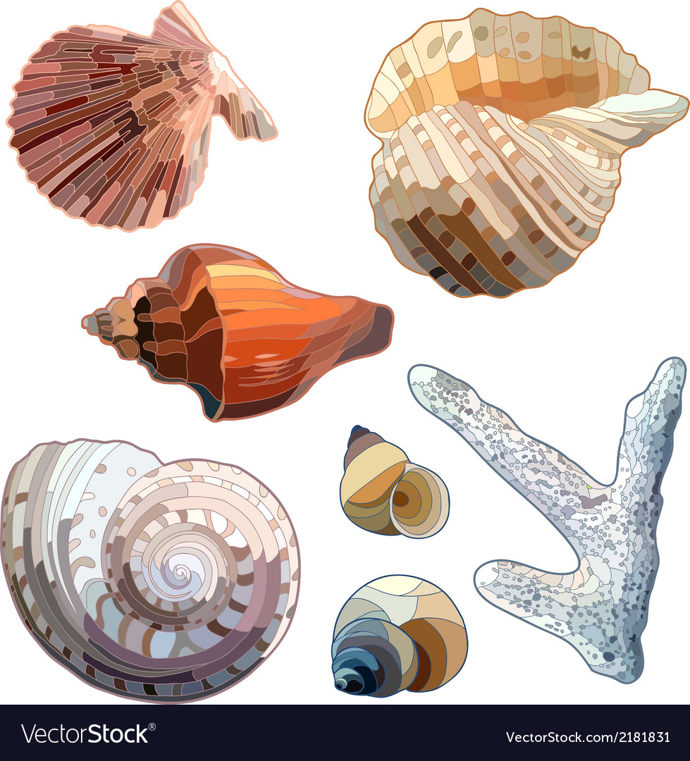 Set of sea shells and coral vector | Price: 1 Credit (USD $1)