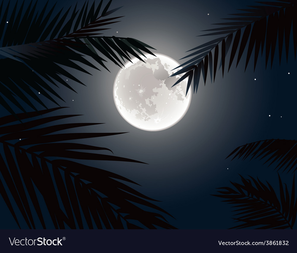 Tropical moon vector | Price: 1 Credit (USD $1)