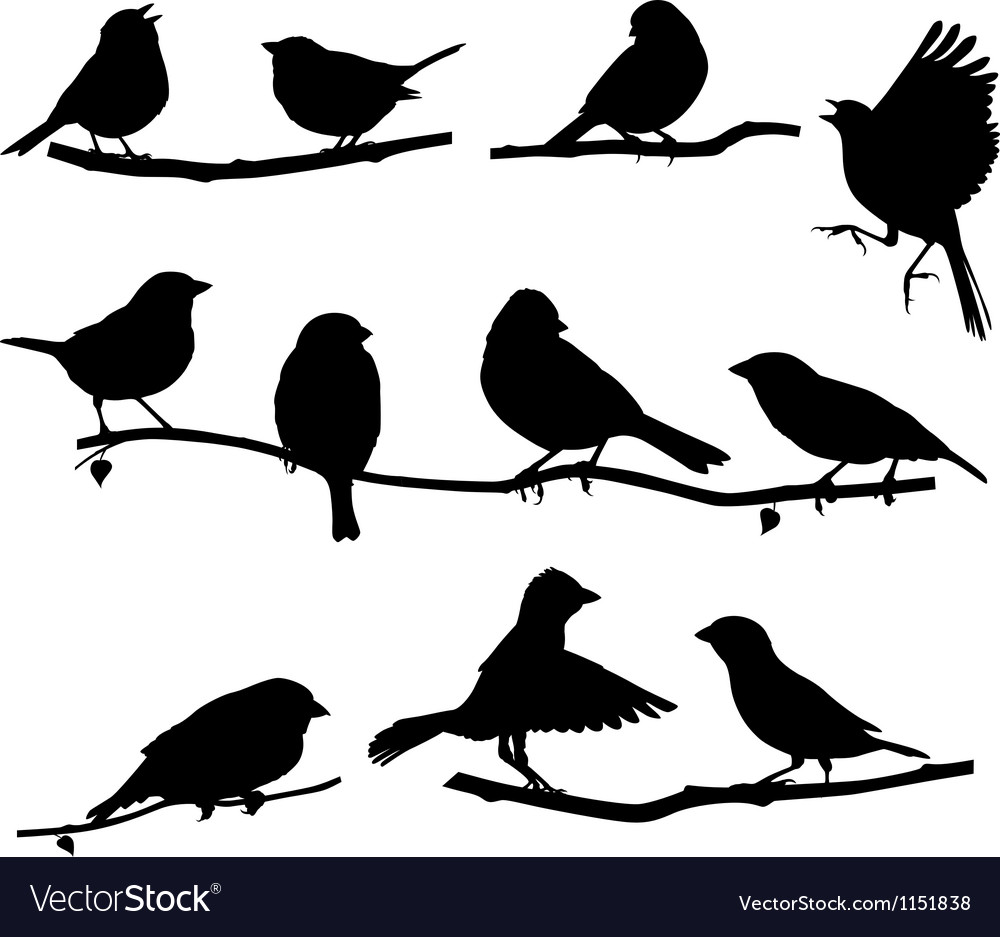 Silhouettes bird on a branch vector | Price: 1 Credit (USD $1)
