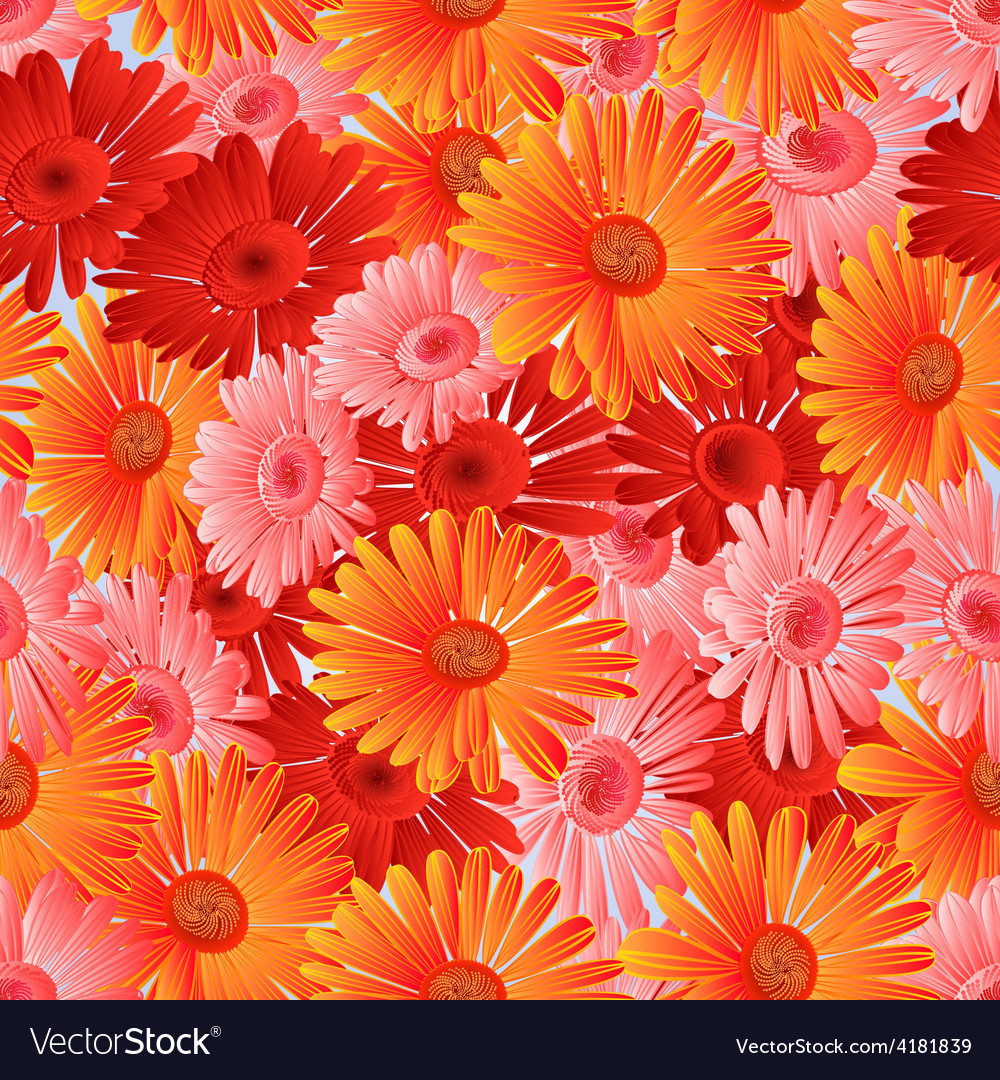 Seamless texture gerbera in festive vector | Price: 1 Credit (USD $1)