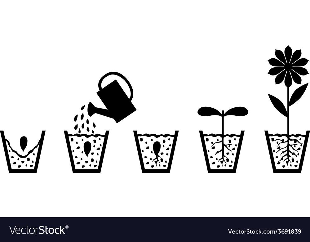 Seed pod vector   Price: 1 Credit (USD $1)
