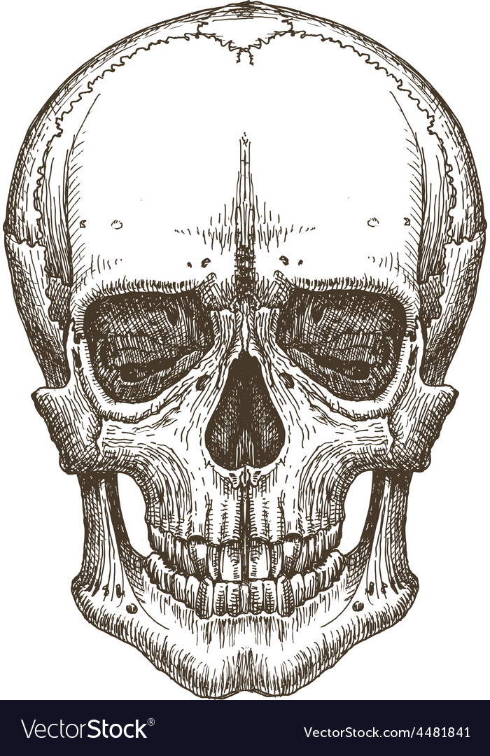 Skull logo design template death disease vector | Price: 3 Credit (USD $3)