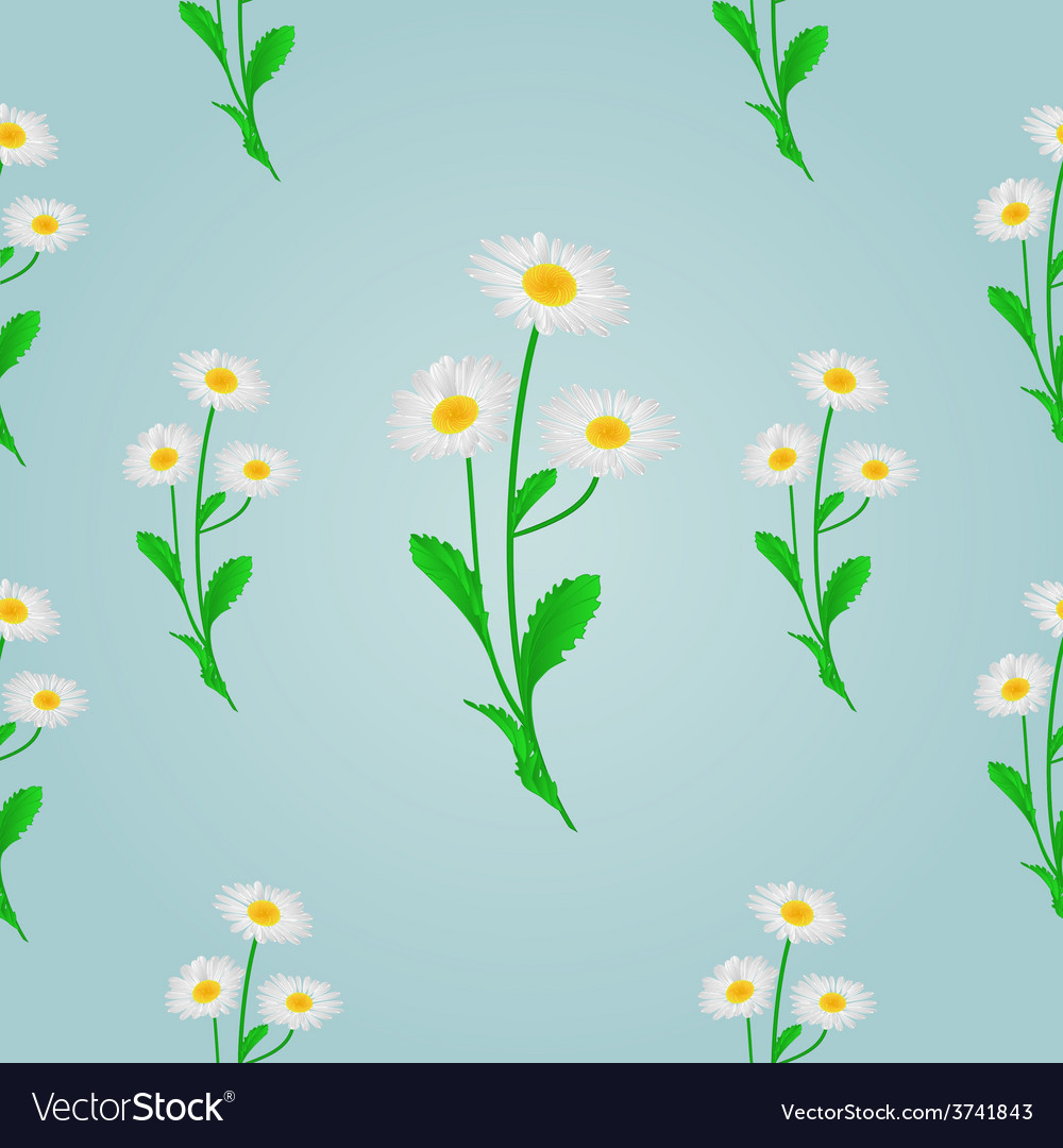 Seamless texture daisy spring blue background vector | Price: 1 Credit (USD $1)