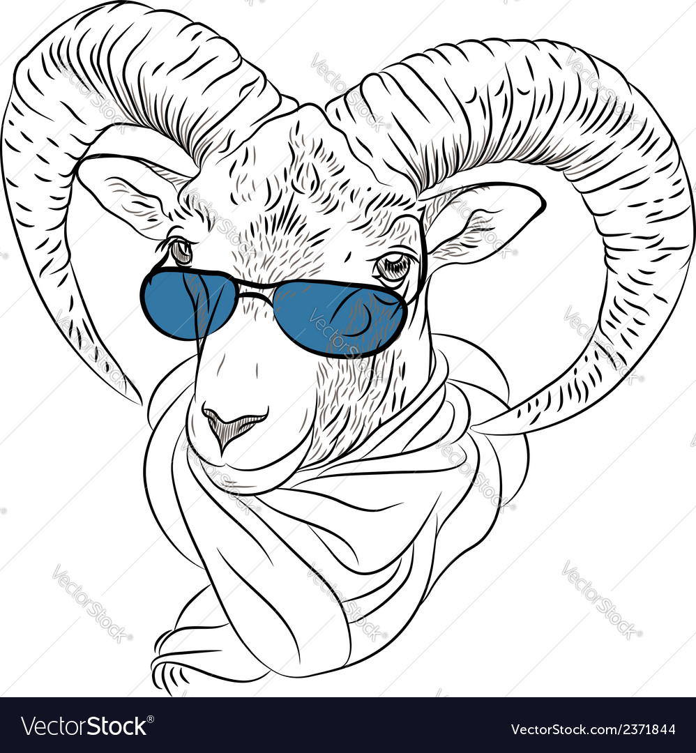 Closeup portrait of funny alpine ibex vector | Price: 1 Credit (USD $1)
