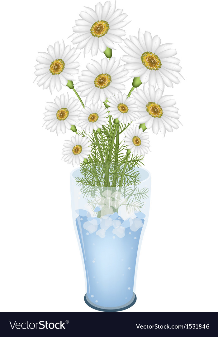 Lovely white daisy flowers in glass vase vector | Price: 1 Credit (USD $1)
