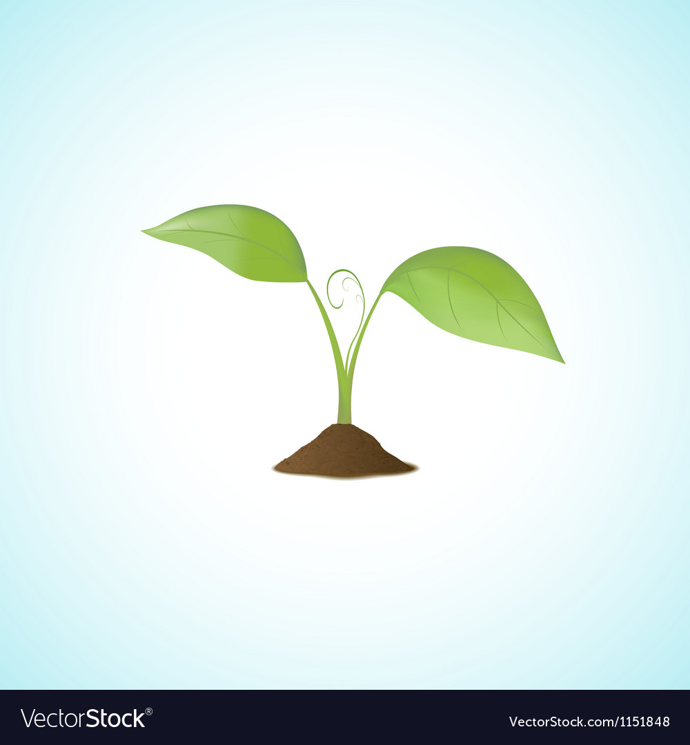 Young plant isolated vector | Price: 1 Credit (USD $1)