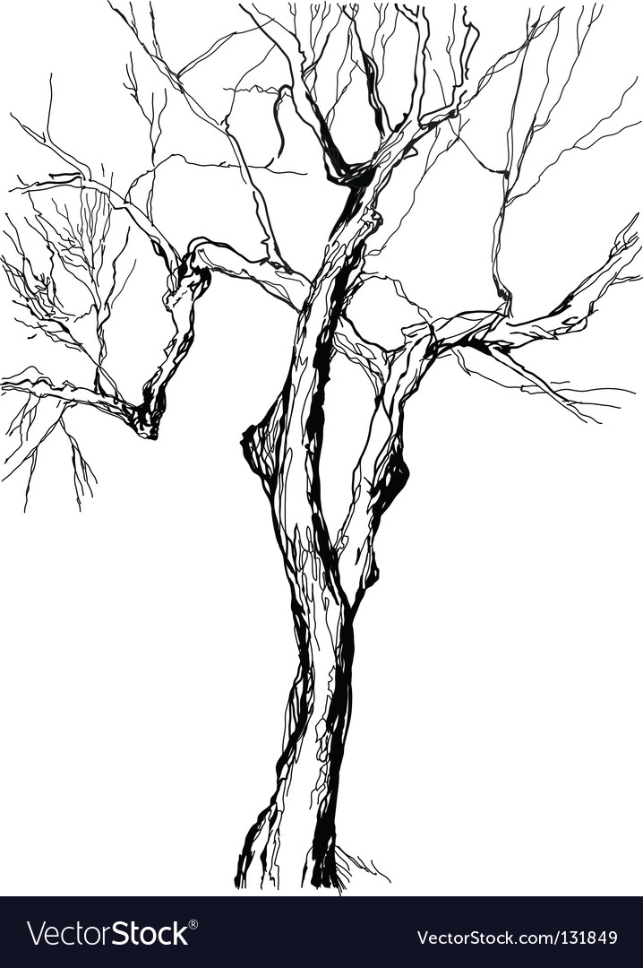 Old tree vector | Price: 1 Credit (USD $1)