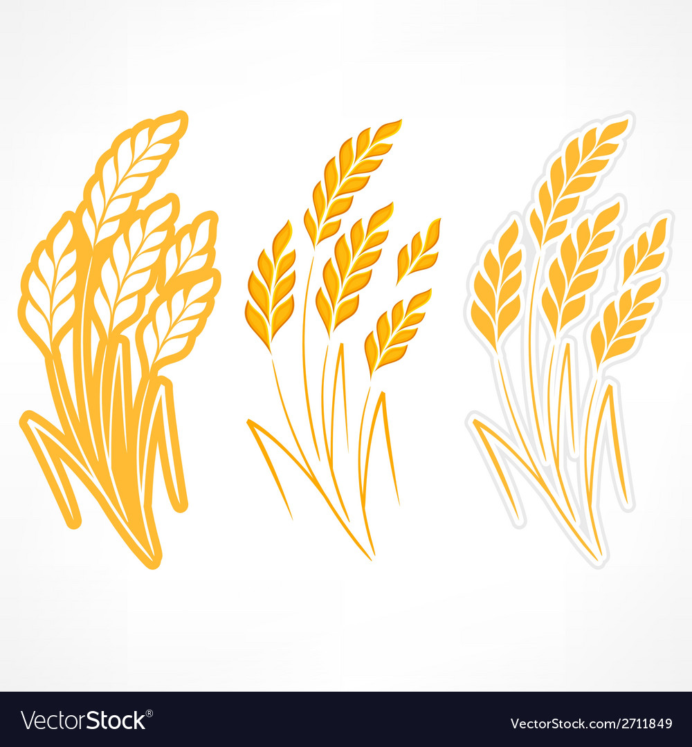Stylized ears of wheat vector | Price: 1 Credit (USD $1)