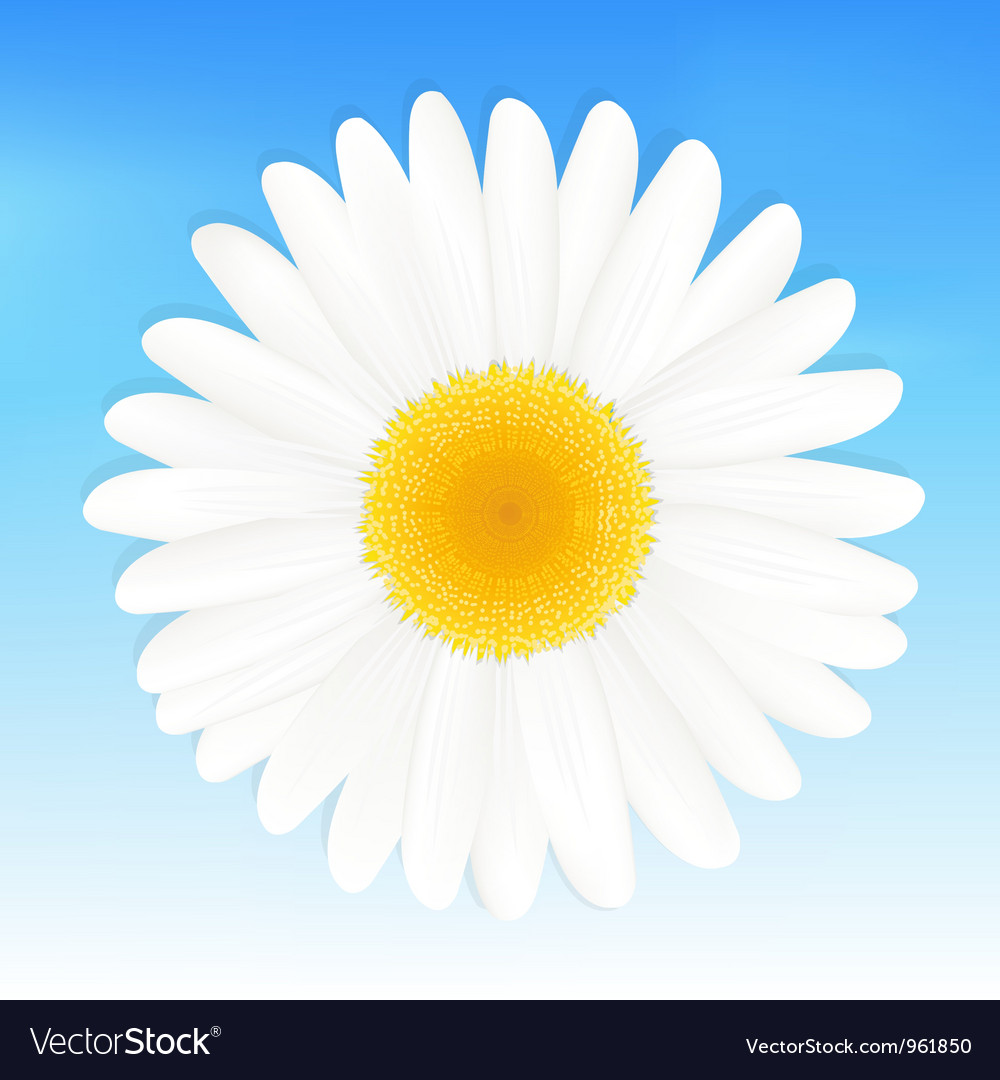 Daisy background vector