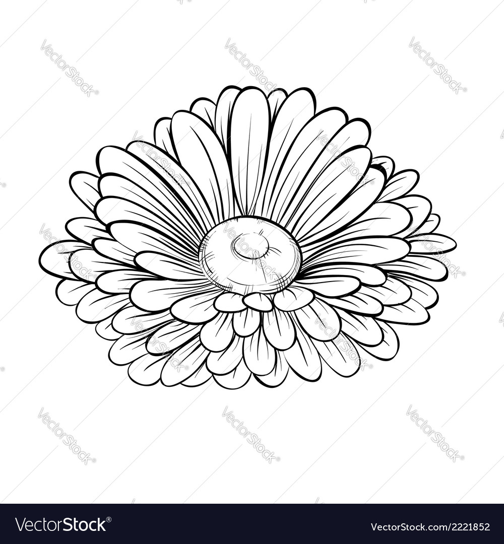 Black and white daisy flower isolated vector | Price: 1 Credit (USD $1)