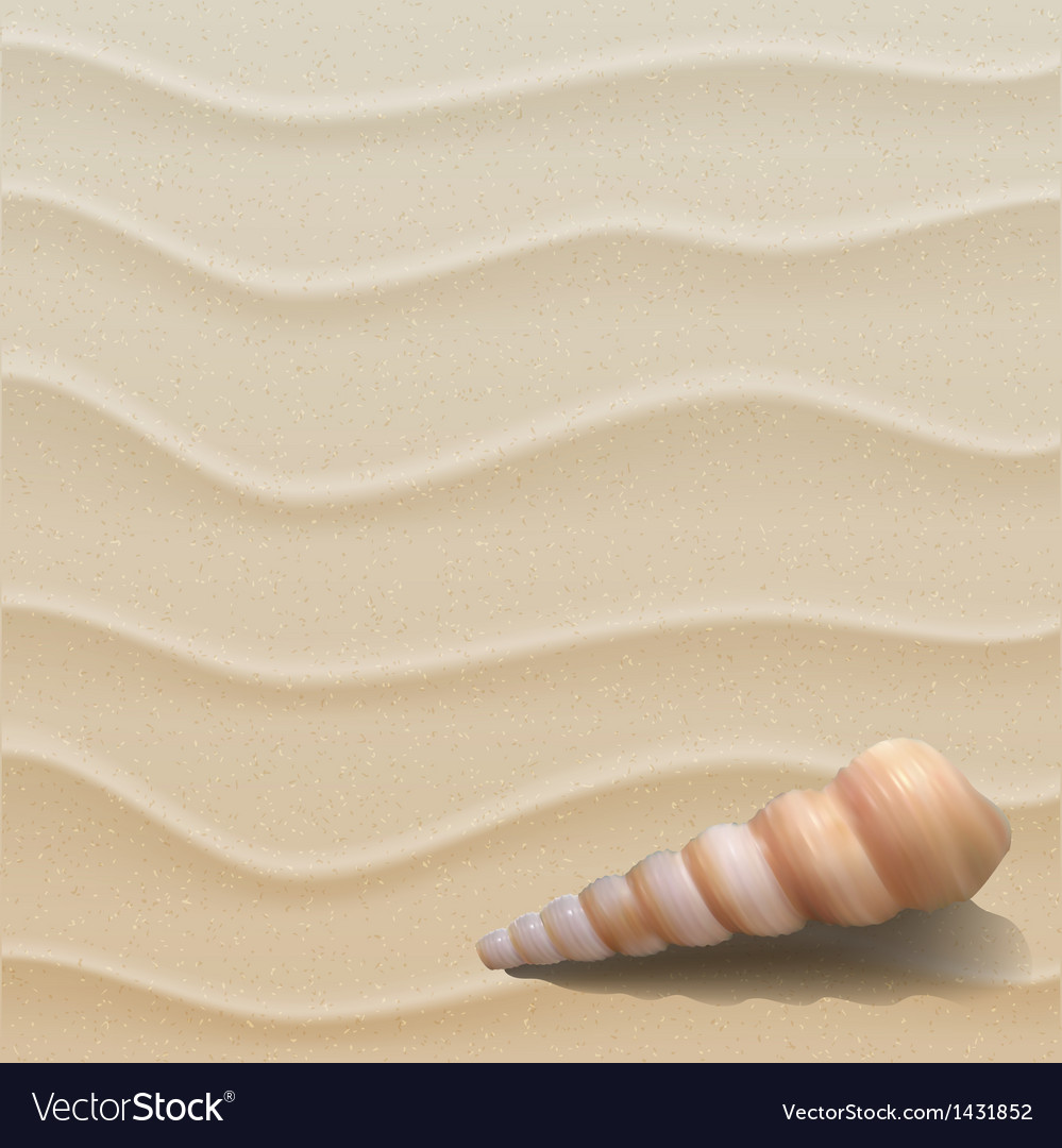 Marine background with seashell on sand vector | Price: 1 Credit (USD $1)