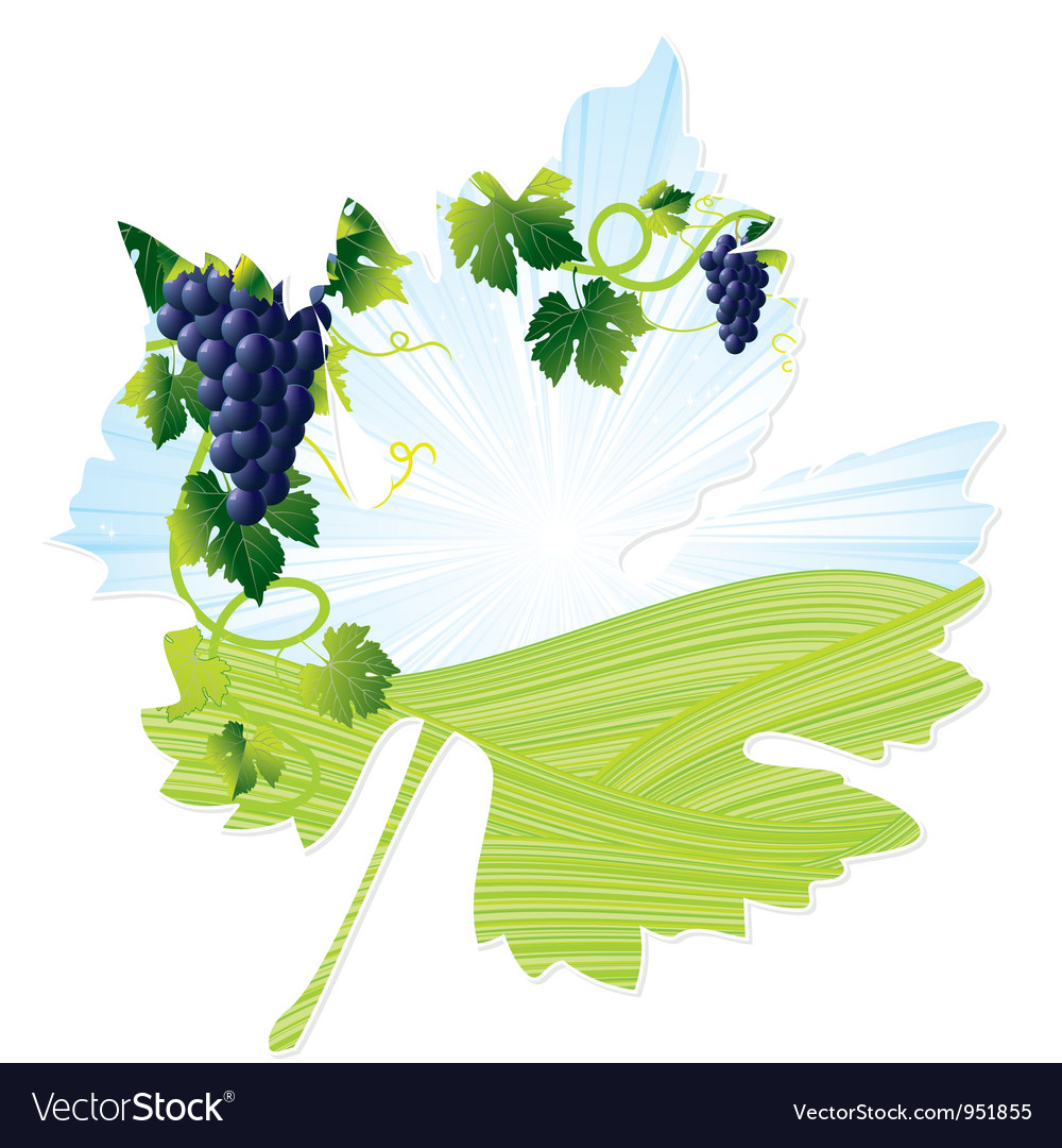 Wine black leaf vector | Price: 1 Credit (USD $1)