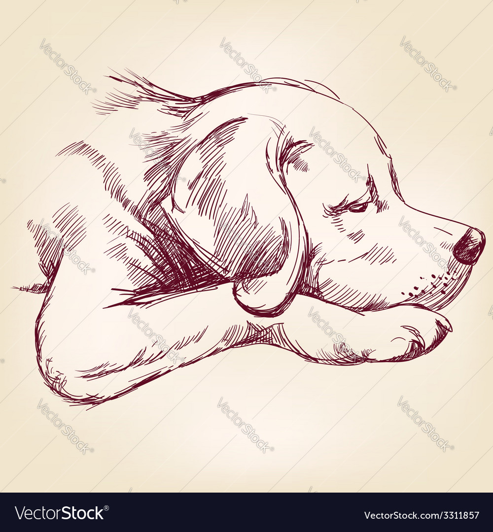 Dog hand drawn llustration realistic sketch vector | Price: 1 Credit (USD $1)