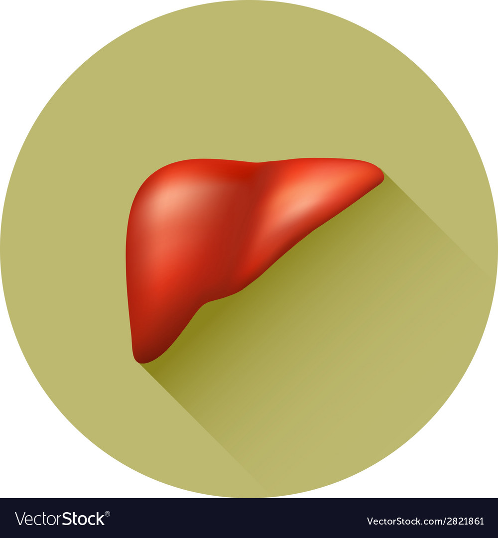 Semi-realistic human liver vector | Price: 1 Credit (USD $1)
