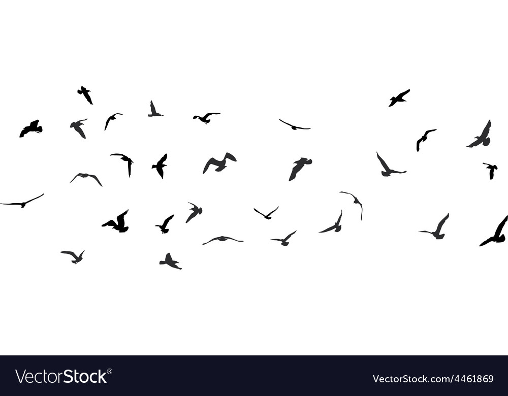 Birds gulls black silhouette on white background vector | Price: 1 Credit (USD $1)