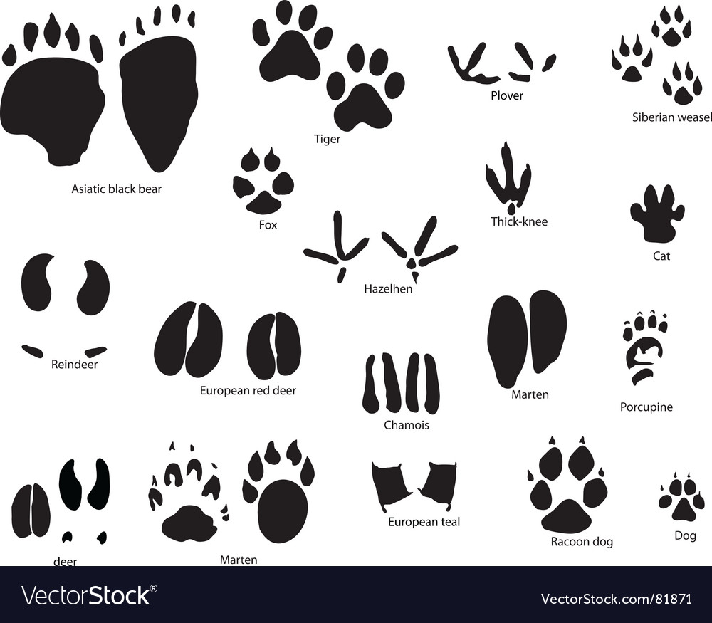Animal trails prints vector | Price: 1 Credit (USD $1)