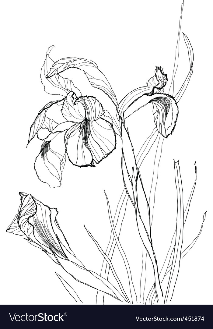 Iris flowers vector | Price: 1 Credit (USD $1)