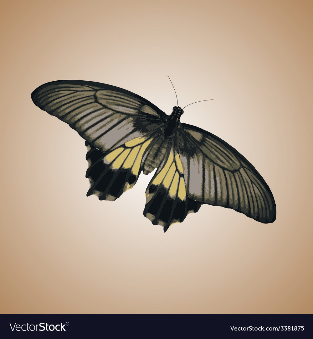 One isolated colorful simple butterfly eps10 vector | Price: 1 Credit (USD $1)