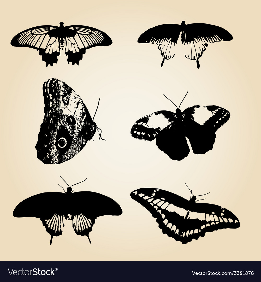 Six types of black butterfly eps10 vector | Price: 1 Credit (USD $1)