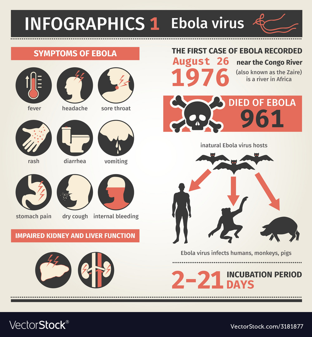 Infographics ebola virus symptoms deaths vector
