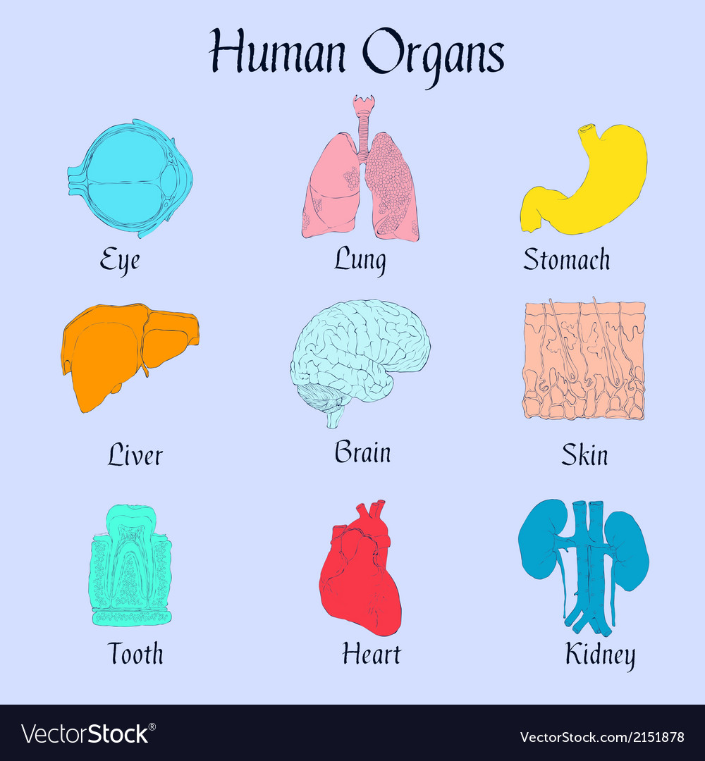 Human organs flat icons vector | Price: 1 Credit (USD $1)