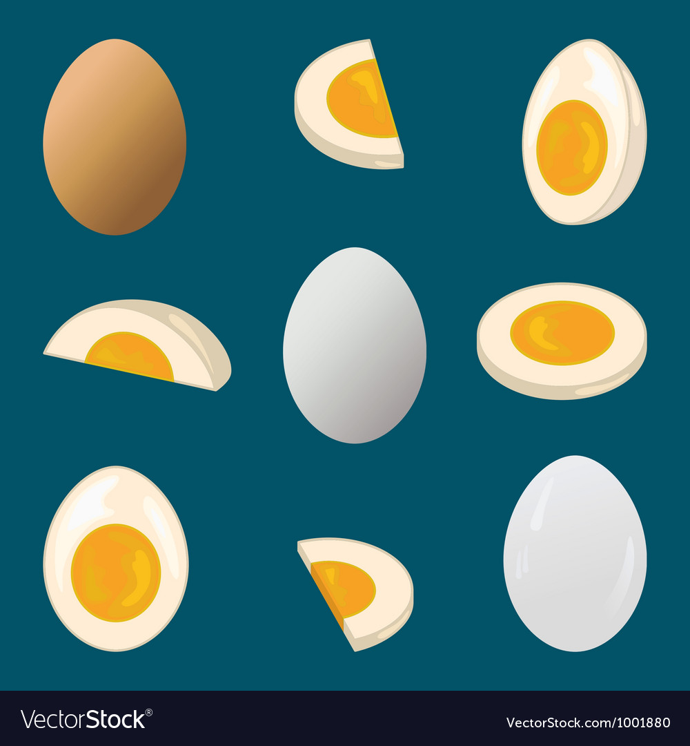 Hard boiled egg vector | Price: 1 Credit (USD $1)