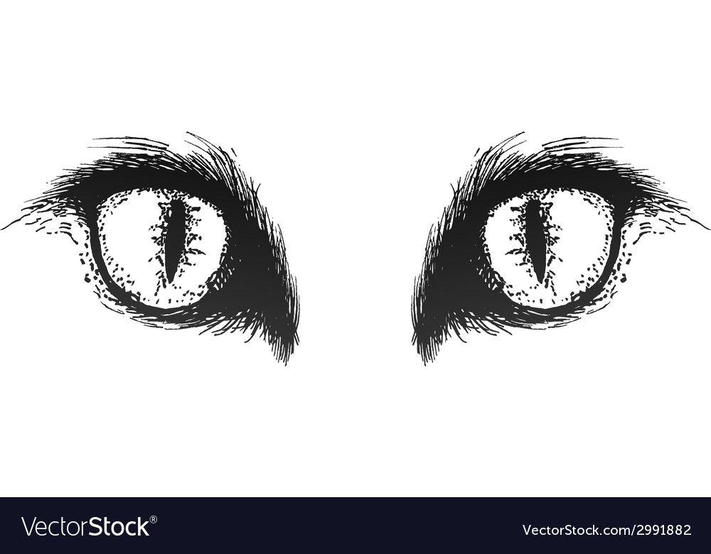 Hand drawn cat eyes eps10 vector | Price: 1 Credit (USD $1)