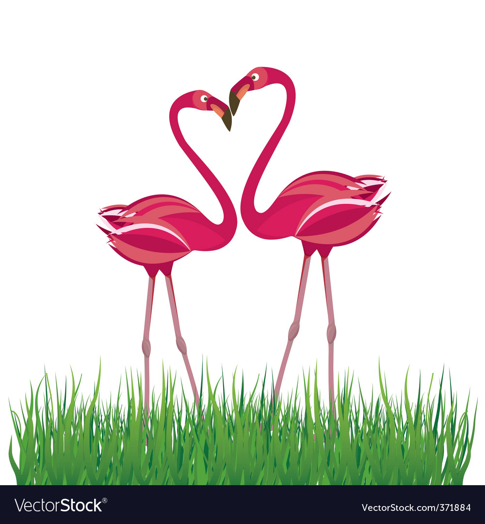 Flamingo in love vector | Price: 1 Credit (USD $1)