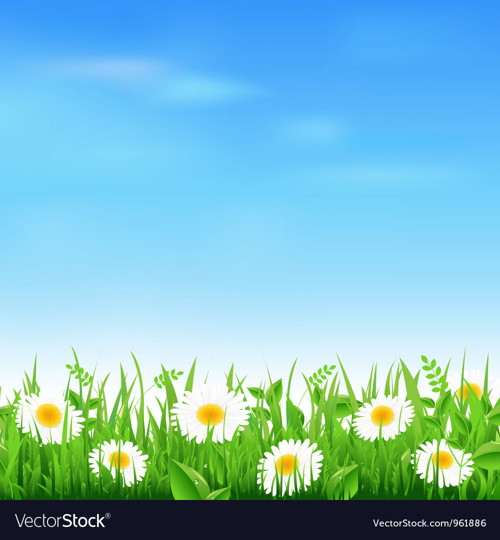 Camomile field vector | Price: 1 Credit (USD $1)