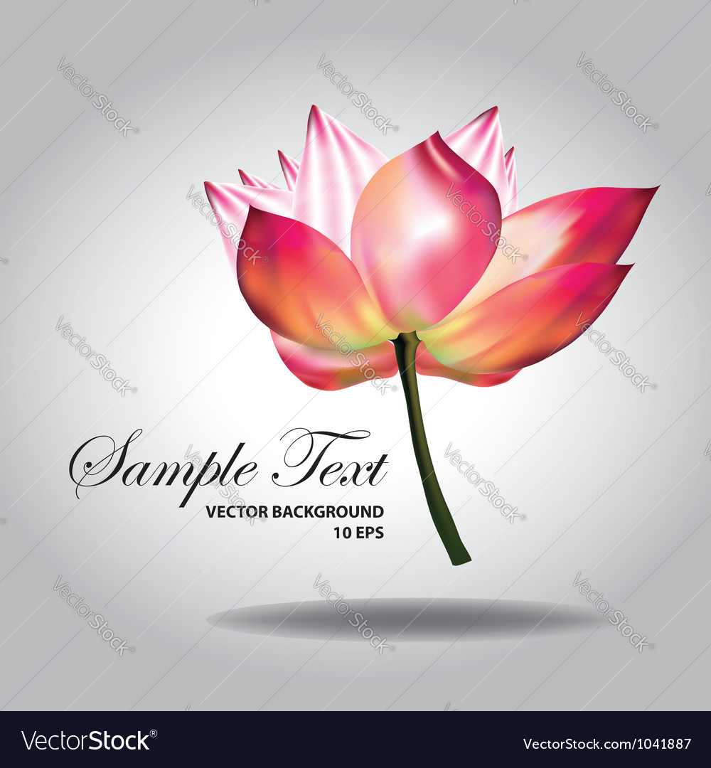 Beautiful pink lotus vector | Price: 1 Credit (USD $1)