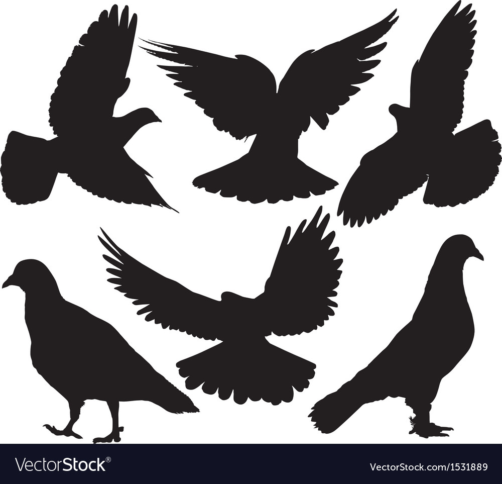 Pigeon silhouette vector | Price: 1 Credit (USD $1)