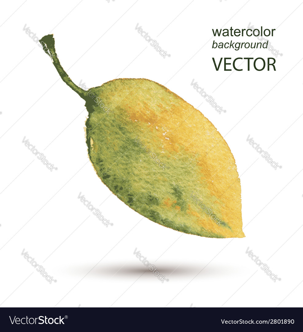 Abstract leaf watercolor hand painted background vector | Price: 1 Credit (USD $1)