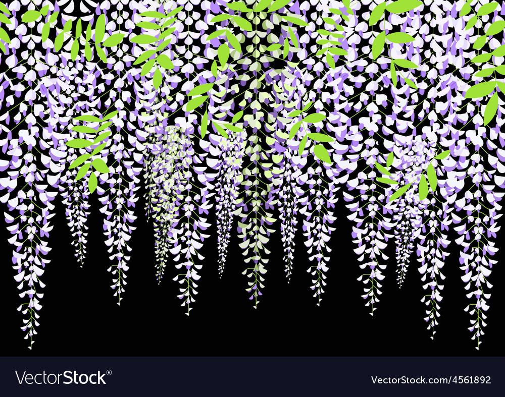 Blooming wisteria branch with leaves vector | Price: 1 Credit (USD $1)