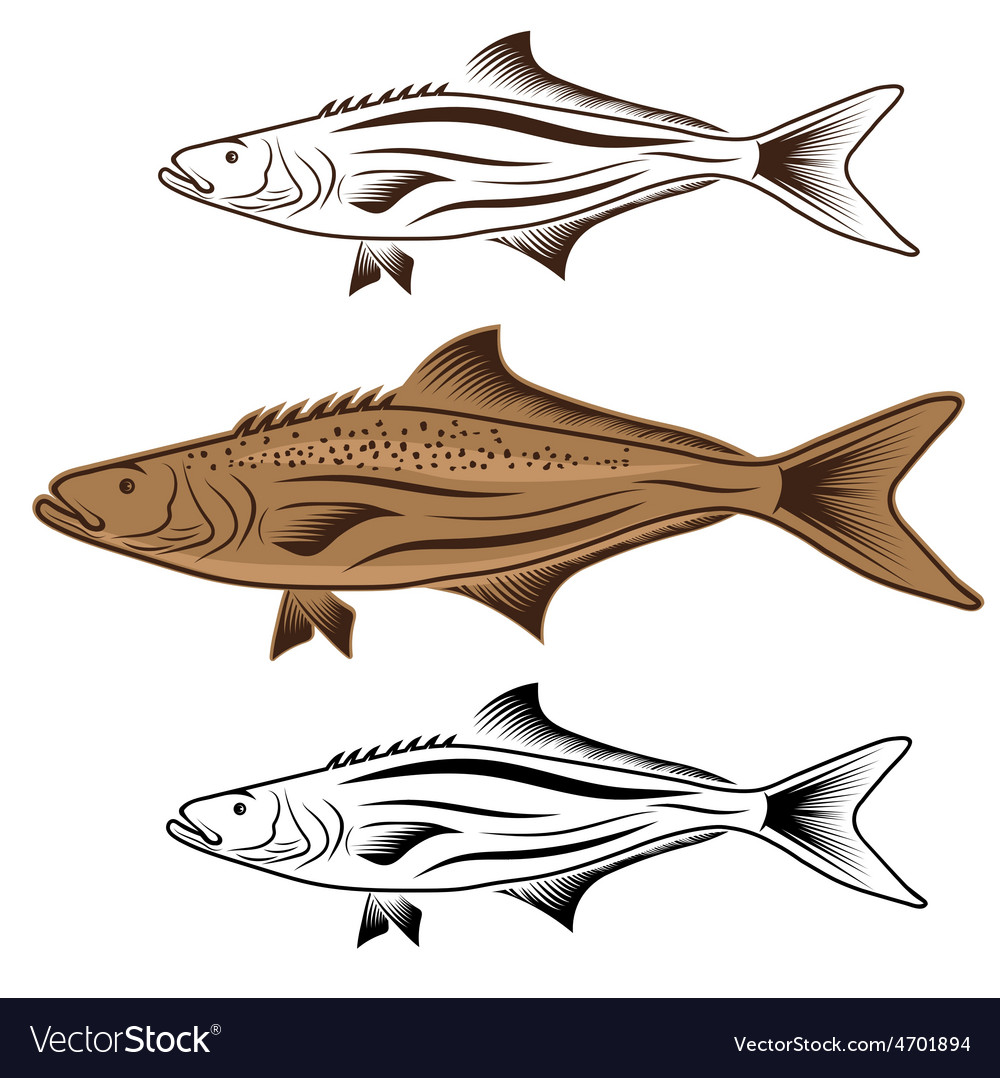 Cod fish design template vector | Price: 1 Credit (USD $1)