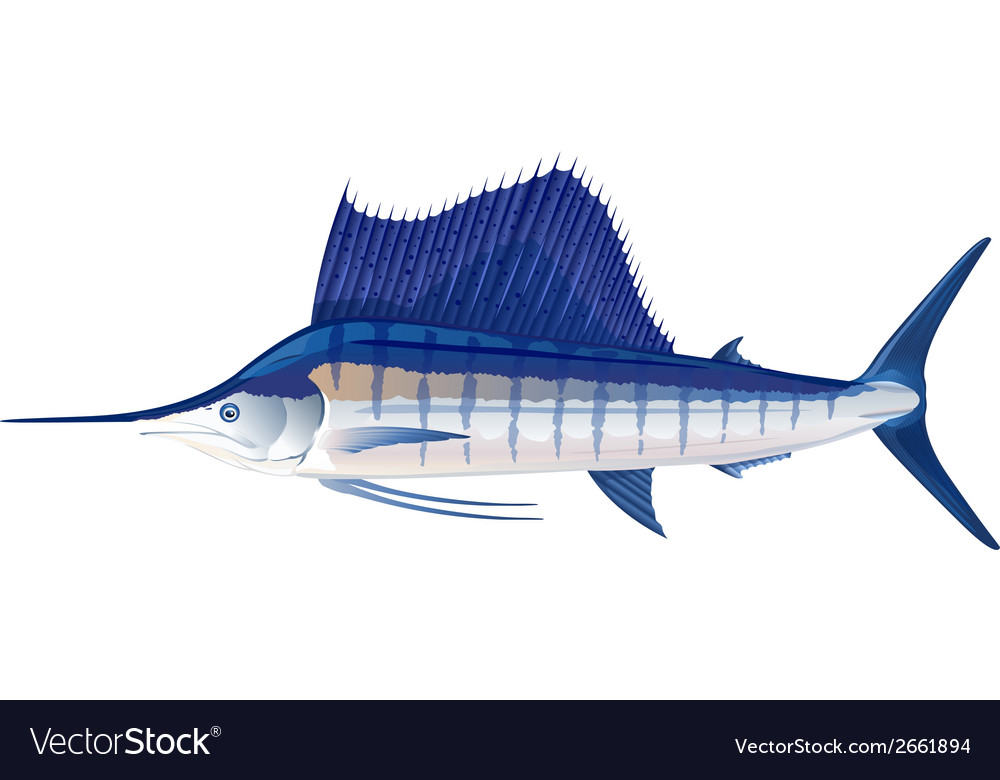 Sailfish vector | Price: 1 Credit (USD $1)