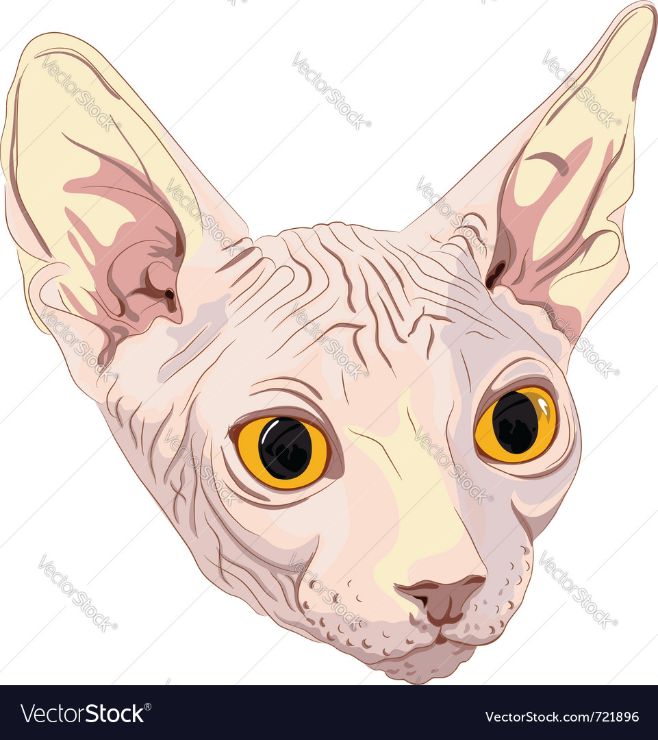 Cat breed sphynx vector | Price: 1 Credit (USD $1)