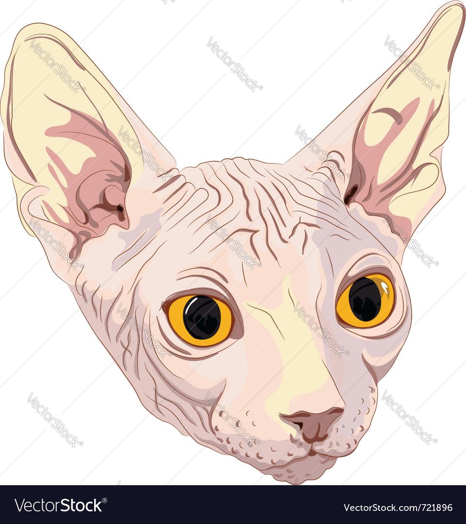 Cat breed sphynx vector | Price: 1 Credit (USD $1)