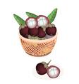 A brown basket of fresh purple mangosteens vector
