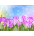 Tulips in garden on blue sky eps 10 vector