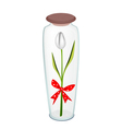 White tulip with red ribbon in glass bottle vector