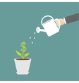 Hand watering can dollar plant in the pot vector