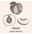 Sketch of whole peach half and segment hand drawn vector