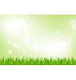 Green grass vector
