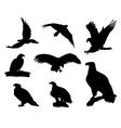 Eagle silhouettes vector